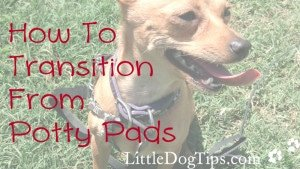 Matilda's tips for quitting puppy pads