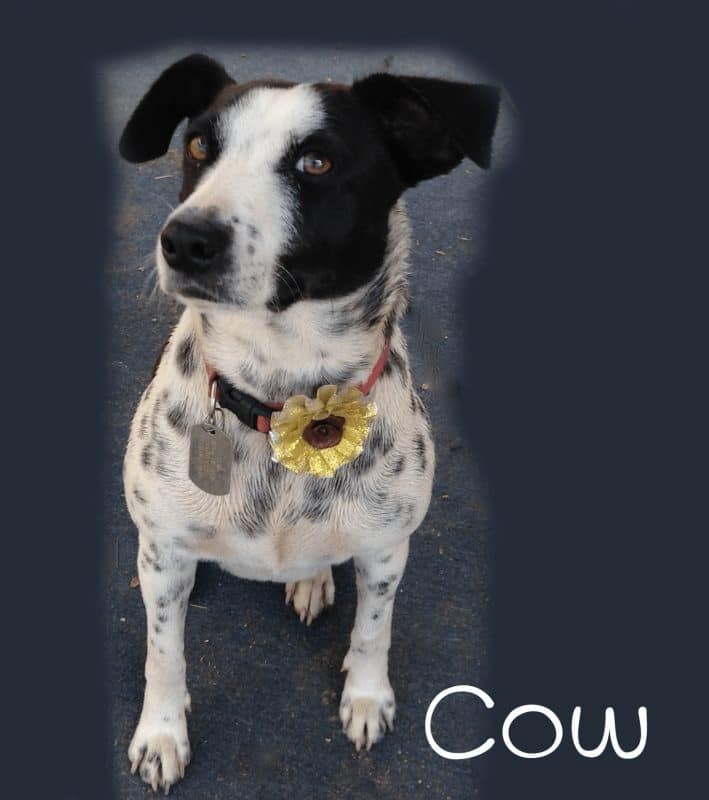 cow flower halloween costume