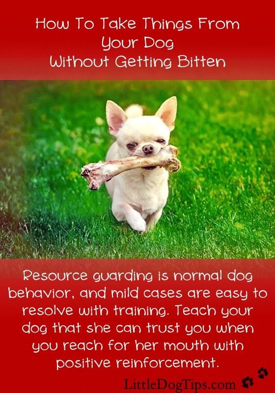 Resource guarding is preventable and treatable. Seek help from a professional trainer or behaviorist for anything other than mild cases that persist. Using positive reinforcement, you can teach your dog that giving up items means you'll present her with an even better reward.