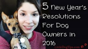 Your #newyearsresolution to being a better dog owner