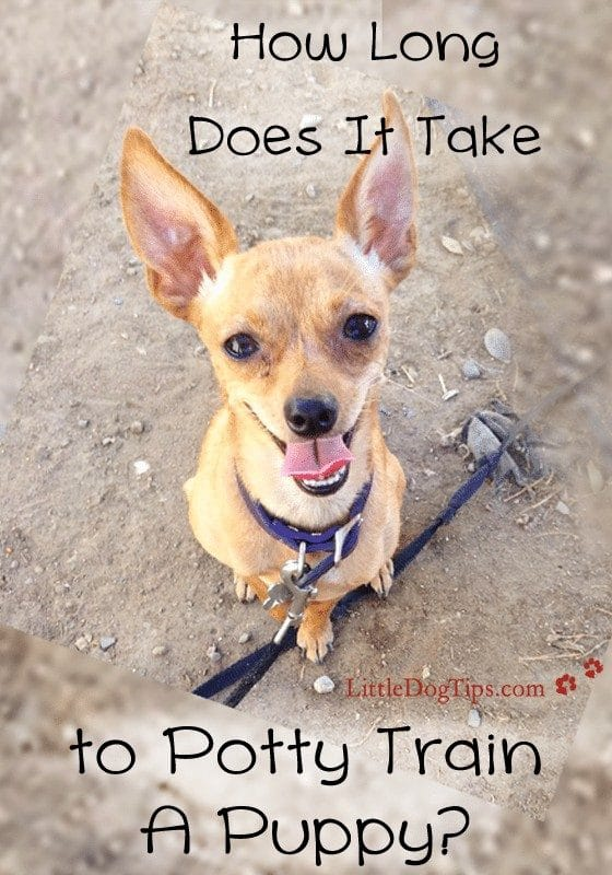 How Long Does It Take To #PottyTrain A Puppy? Use these tips to make progress if it seems like your pup is taking a long time to catch on. It's time to go accident free!