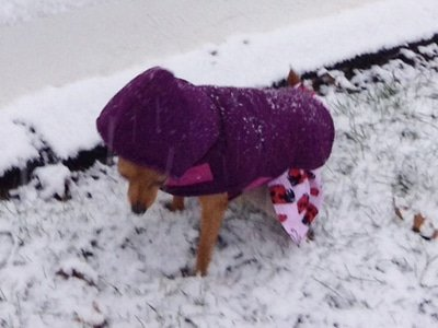 Matilda braves the snow to go potty
