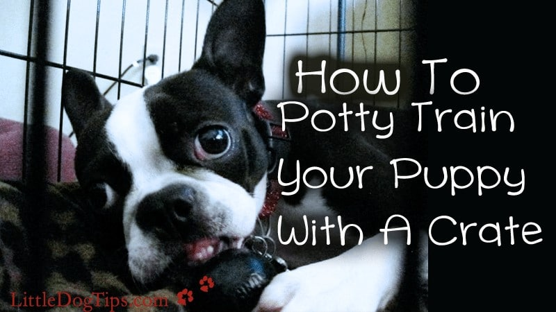 Potty Train Your Dog With A Crate