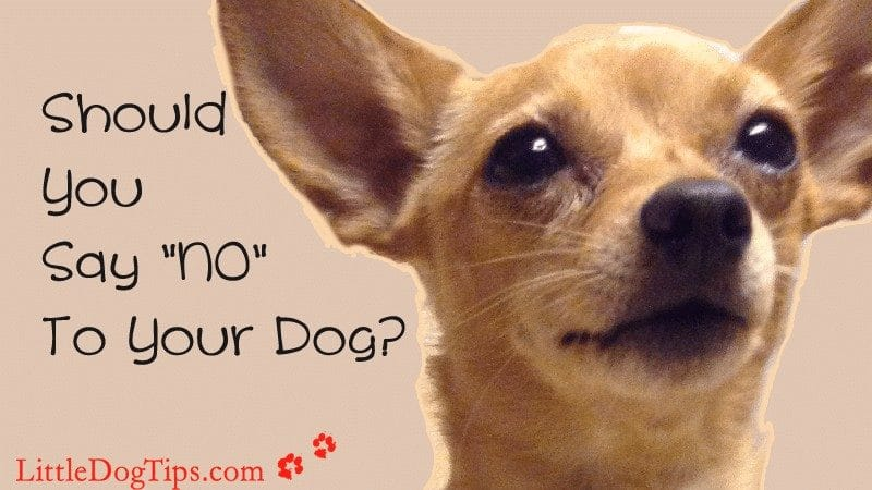 "Should You Say ""No"" To Your #Dog? Stopping bad behavior with #positivetraining seems to go against what we're accustomed to, but the results are so worth it!"