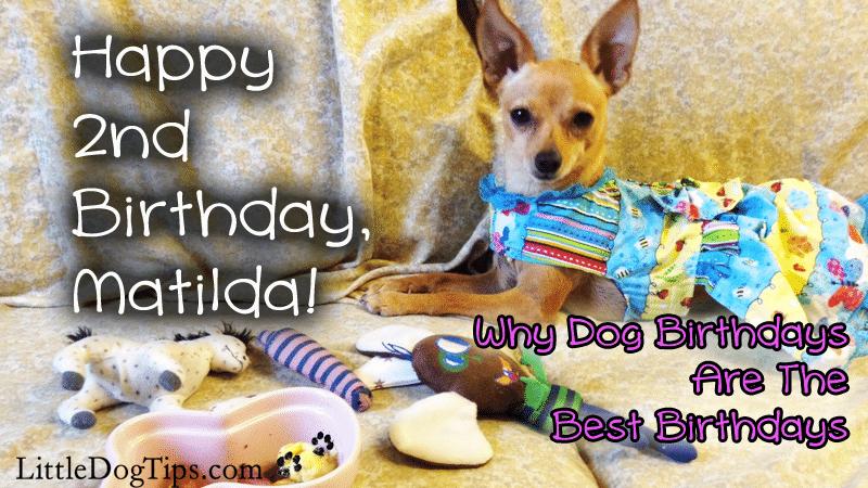 Happy 2nd Birthday, Matilda! Why Dog Birthdays Are The Best Birthdays: