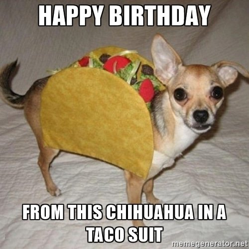 Happy birthday from this chihuahua in a taco suit
