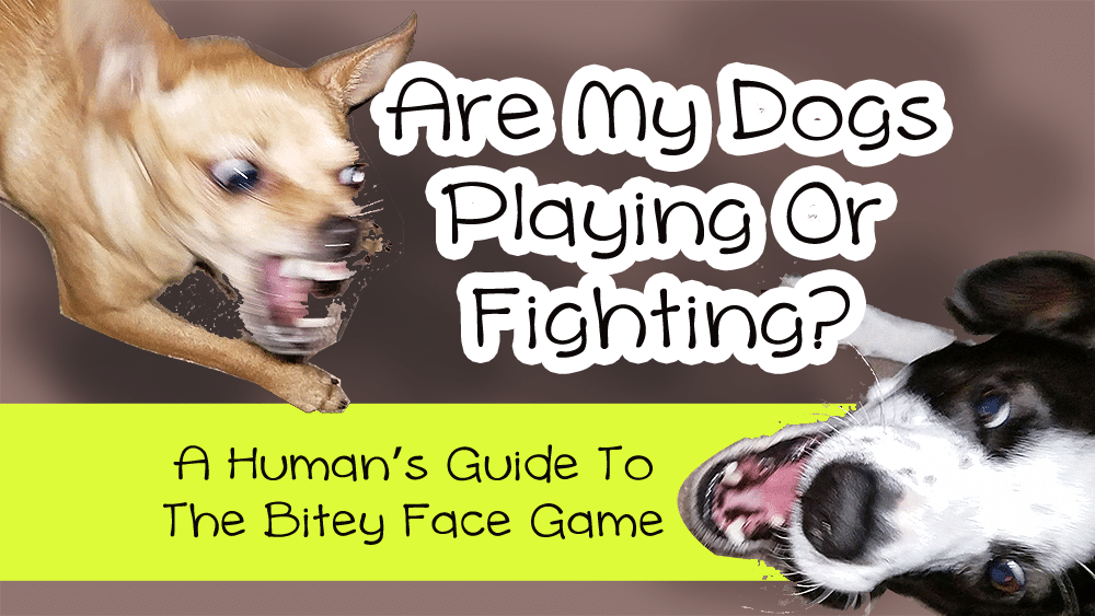 How Can I Stop My Dog From Play Fighting