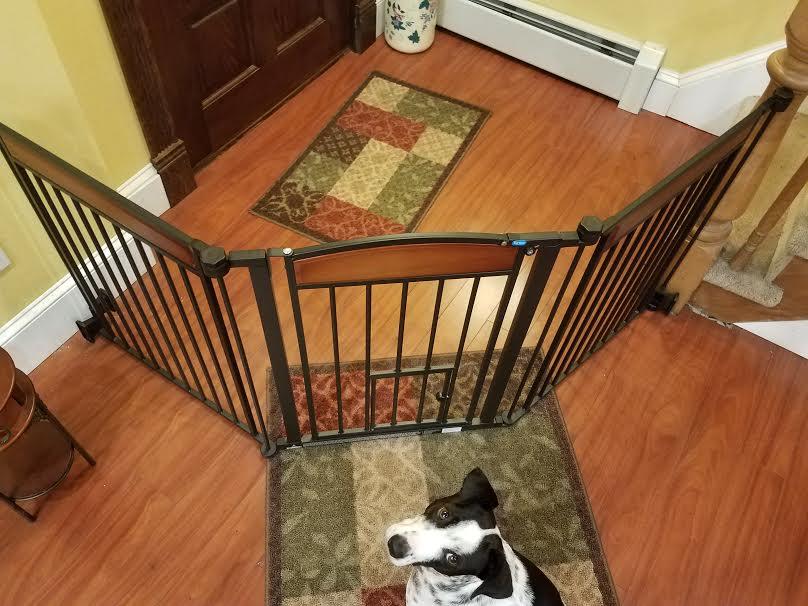design-paw-gate