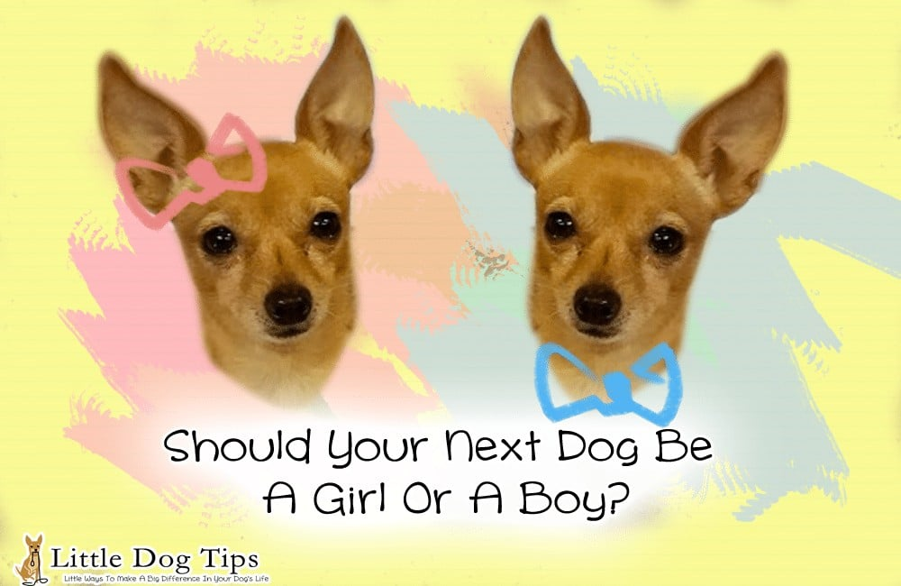 Should your next dog be a girl or a boy? Here's the pros and cons of each, plus the myths surrounding how gender affects temperament and personality.