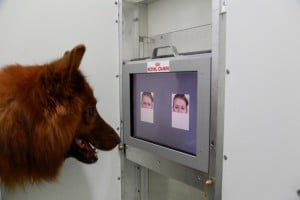 Study: Dogs recognize human facial expressions