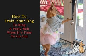 How To Teach Your Dog To Ring Potty Bells Hanging On Your Door