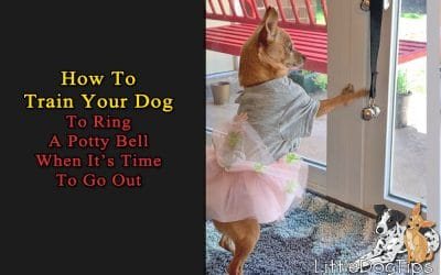 How To Train Your Dog To Use Potty Bells