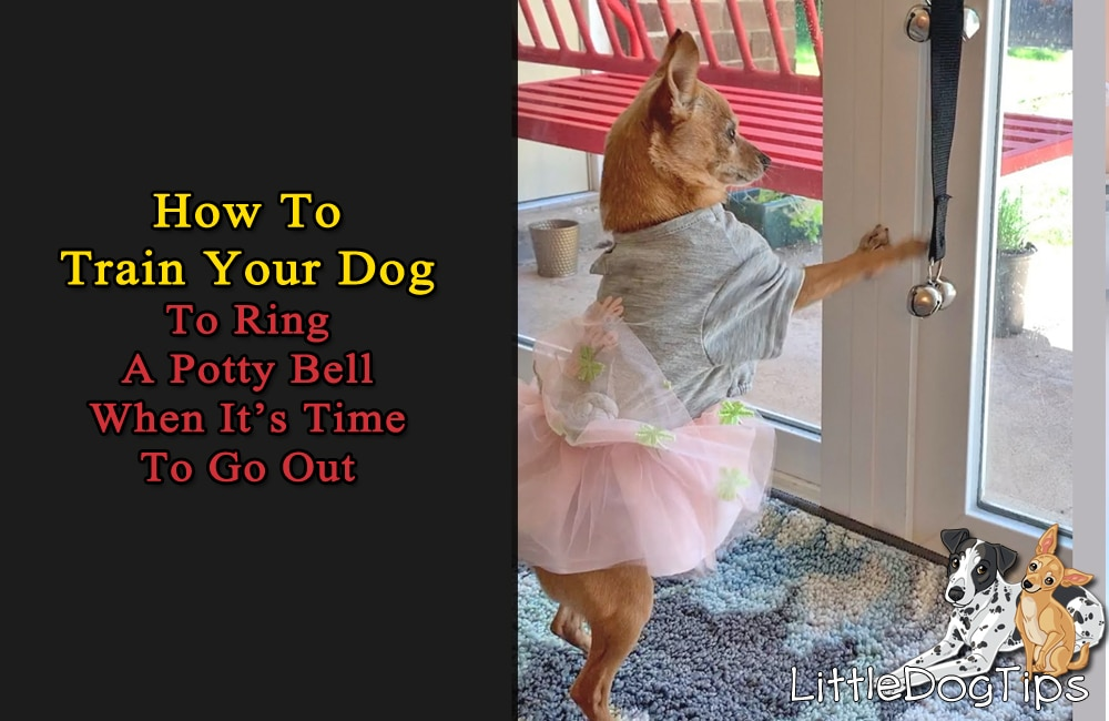 How To Train Your Dog To Use Potty Bells In 3 Easy Steps