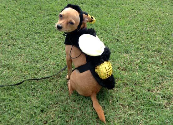 Matilda bee hat