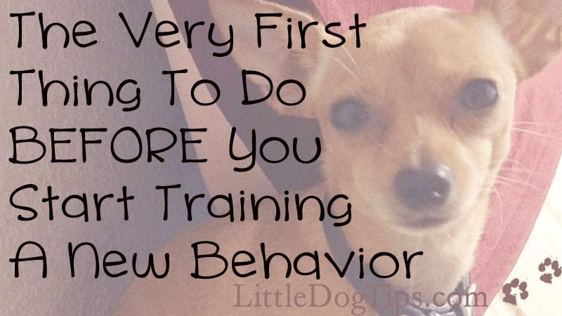 The Very First Thing To Do Before You Train A New Behavior