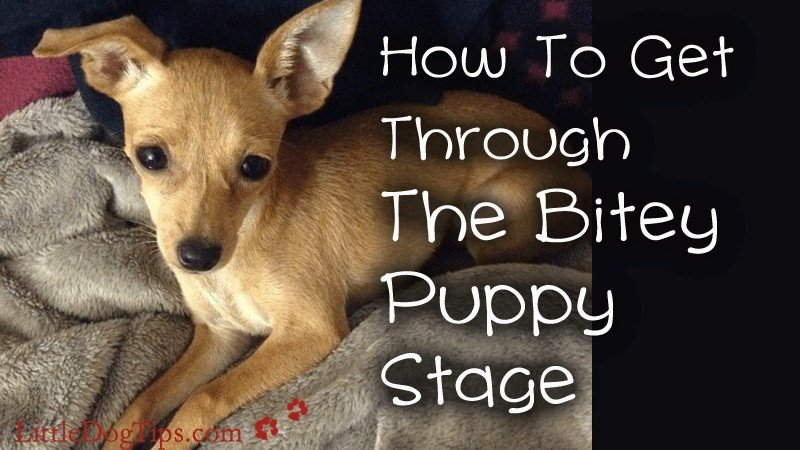 How To Get Through The Bitey Puppy Stage With All 10 Fingers