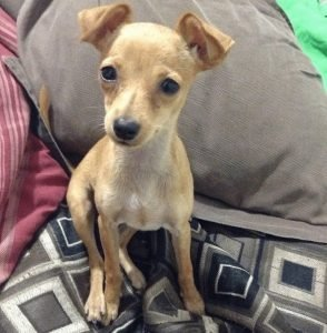 floppy ears baby puppy Matilda