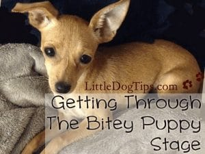 #Dogtraining #Tips for the Bitey #Puppy Stage