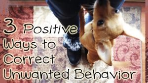 #Positivetraining: 3 Ways To Correct Unwanted Behavior