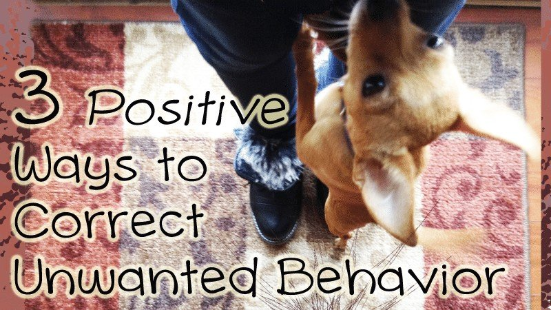 3 Positive Ways To Correct Your Dog's Unwanted Behaviors