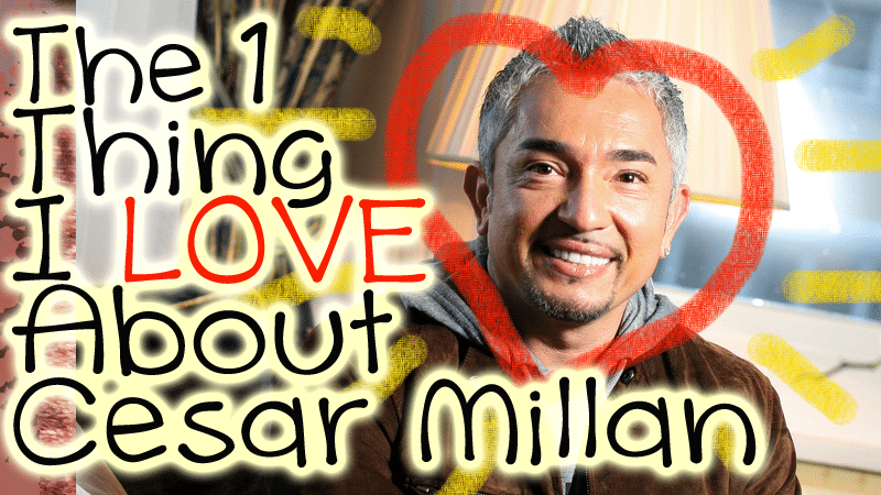 What I Love About Cesar Millan