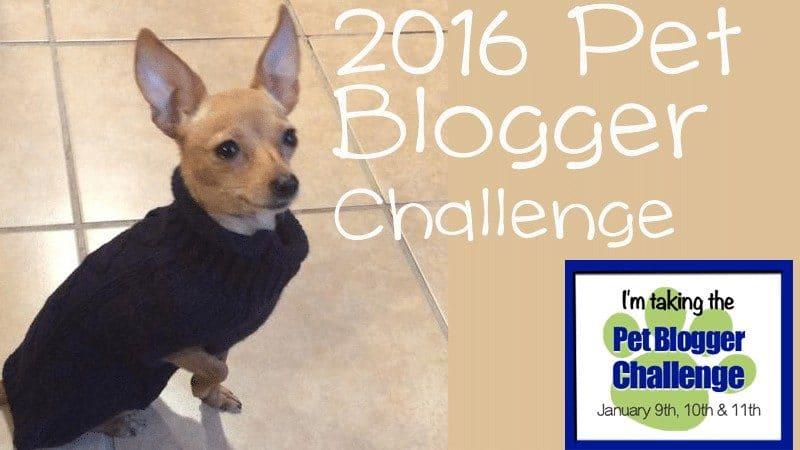 pet blogger challenge 2016 gopetfriendly