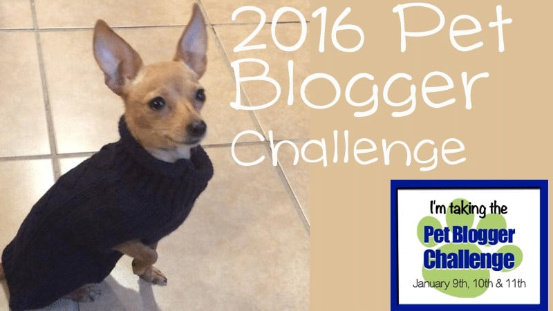2016 Pet Blogger Challenge by GoPetFriendly