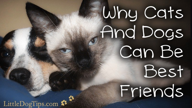 Why Cats and Dogs Can Be Best Friends