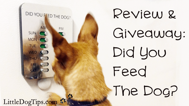 """Pet Product Review/Giveaway: The """"Did You Feed The Dog?"""" Solution"""