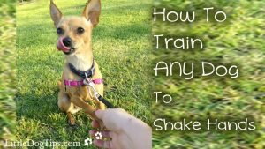 How To Teach Your #Dog To Shake Hands