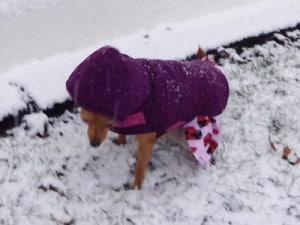 Matilda braves the snow to go potty