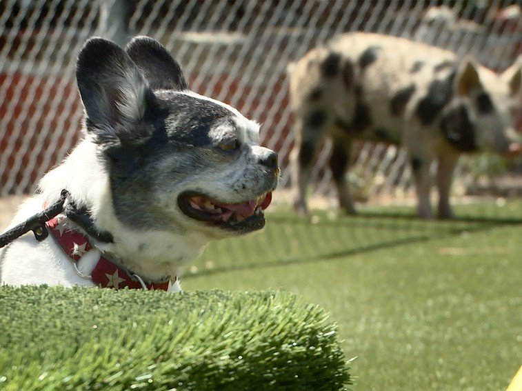 What Went Wrong On Cesar 911: Simon Strikes Again (And How Dogs Should Be Set Up For Success)