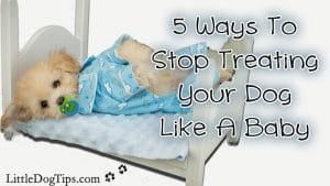 Stop Treating Your #Dog Like A Baby