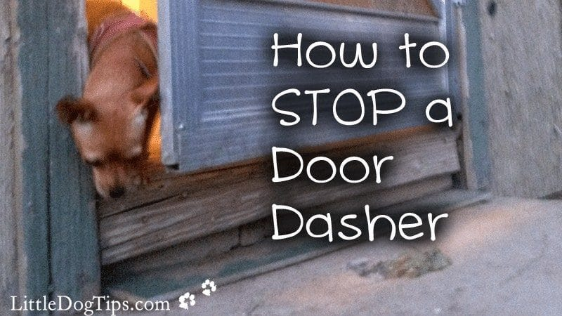 How To Stop A Door Dasher With Positive Reinforcement Training and the Premack Principle - Matilda of Little Dog Tips