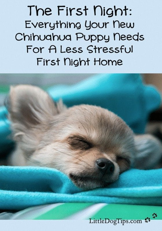 The First Night Home: Helping your #chihuahua #puppy adjust with less stress.