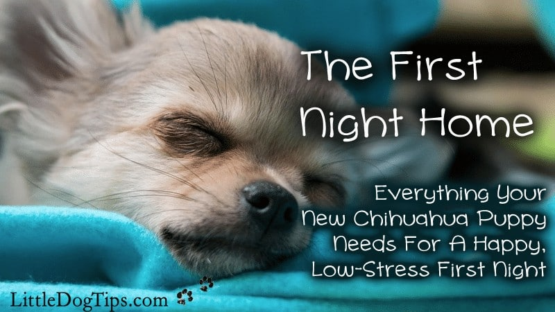 Need-To-Know Tips For Your First Night With Your Chihuahua Puppy