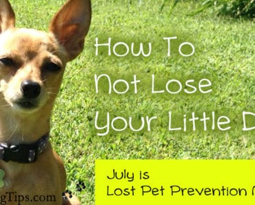 How to not lose your little #dog!