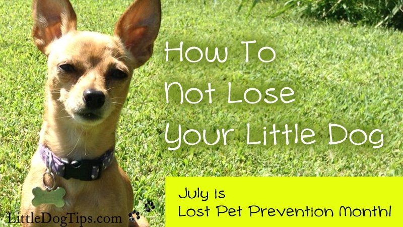How Not To Lose Your Little Dog