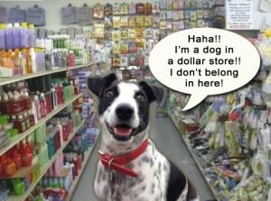 Cow laughing at the dollar store - Can #dogs laugh? It turns out, they can!