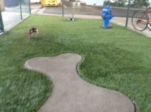 Matilda at the LAX dog potty relief area