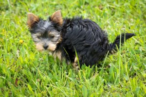 You can potty train your puppy without a crate - you'll need more supervision and a confined puppy proof room.