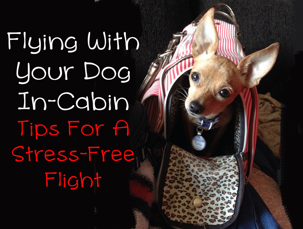 How to fly with your dog in cabin little dog tips for Air travel with dog in cabin
