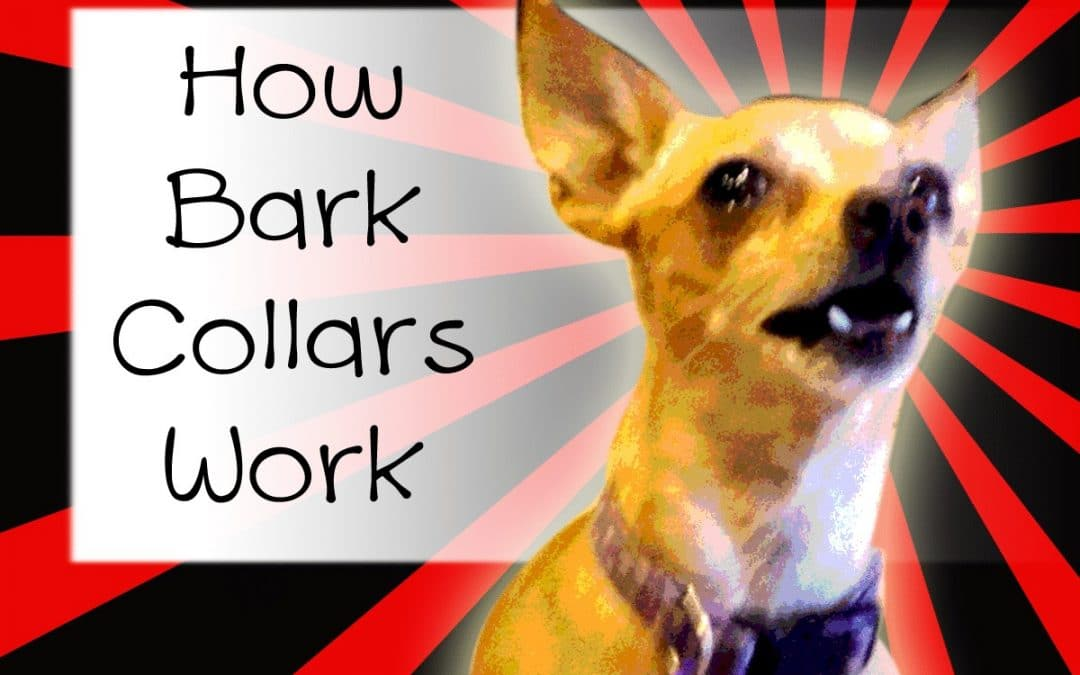 How Do Bark Collars Work? - Little Dog Tips