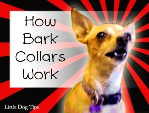 How a Bark Collar Works to stop dogs from barking due to stress, protectiveness and separation anxiety, fallbacks and alternative solutions to nuisance barking: