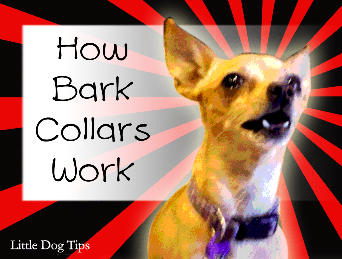 Do Citronella Collars For Dogs Work