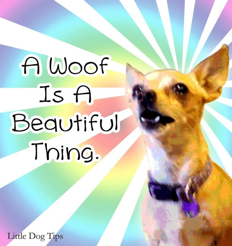 A woof is a beautiful thing.