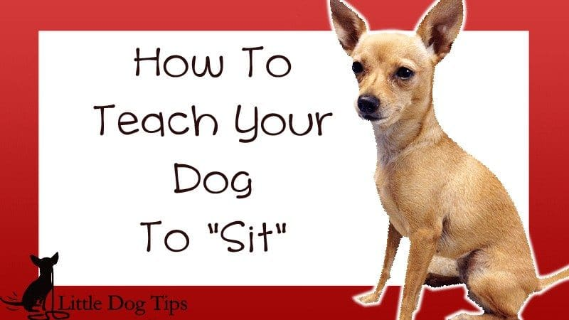 Teach your dog to sit using both a verbal cue and a hand signal. Everything you need to know about a quickly teaching your dog to sit in a way she understands: