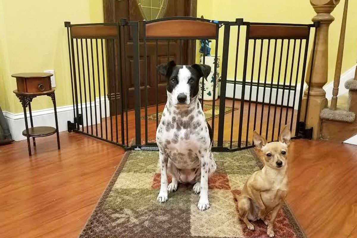 Review: Design Paw Arched Flexi Pet Gate #sponsored by Carlson Pet