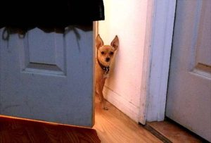 Hide and Seek for dogs