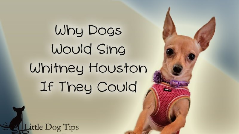 Why Dogs Would Sing Whitney Houston If They Could